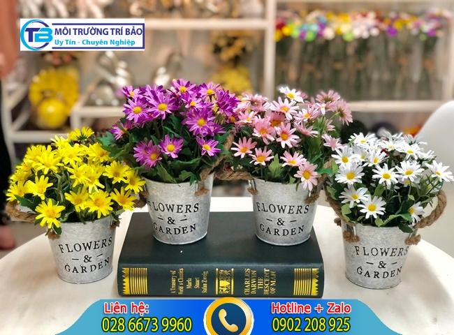 Cây hoa cúc có khả năng hấp thụ khí độc trong nhà